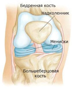Коленный сустав строение мениски кровоснабжение суставов стопы