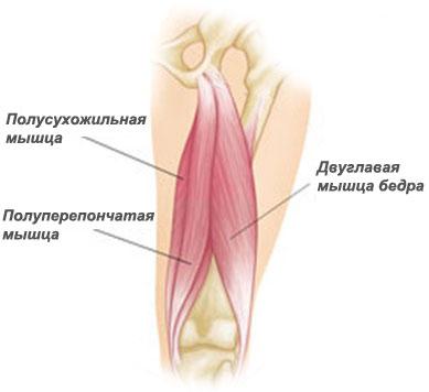 Реабилитация упражнения при отрыве сухожилия бицепса